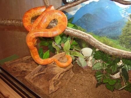 Как обогреть террариум для змей