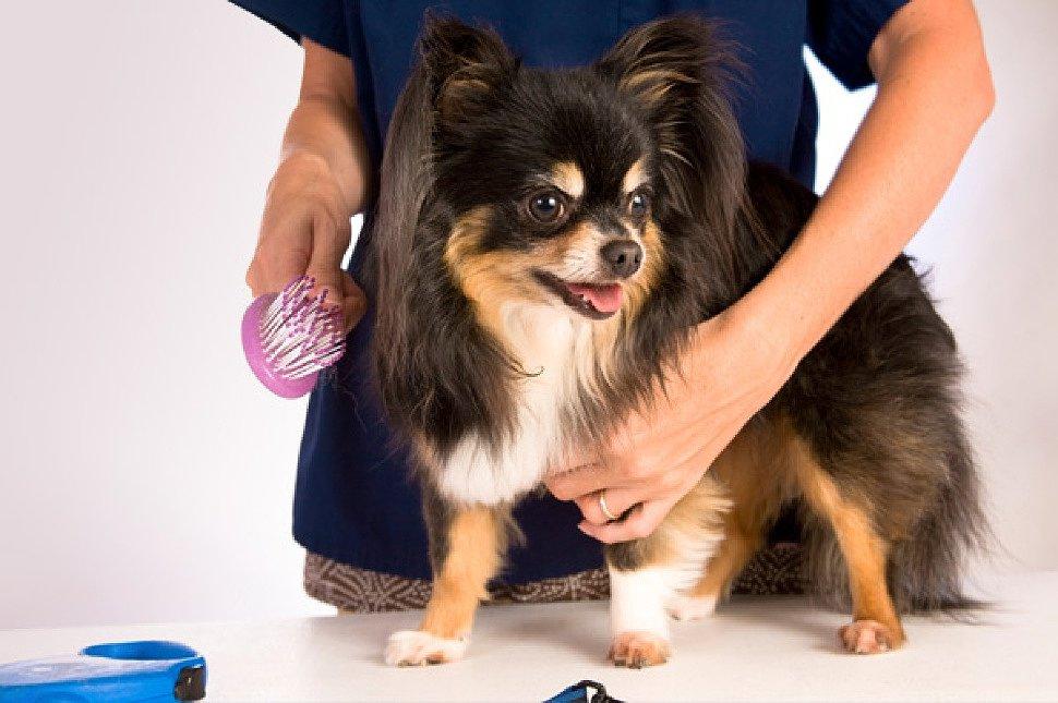 как научиться стричь собаку