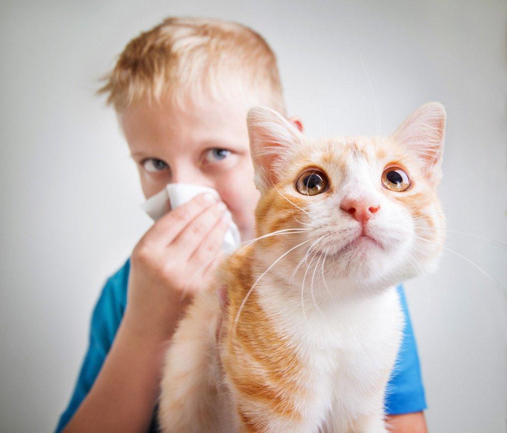 какое животное можно завести аллергику