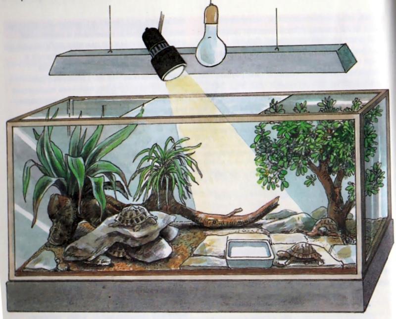 террариум для сухопутной черепахи купить