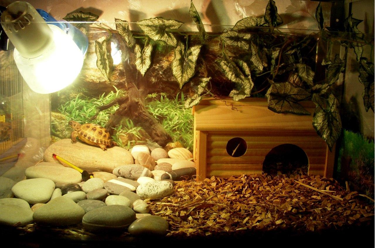 террариум для сухопутной черепахи фото