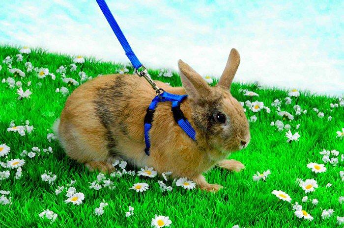 шлейка для кролика