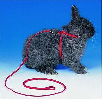 Как сделать поводок для кролика своими руками в домашних условиях 97